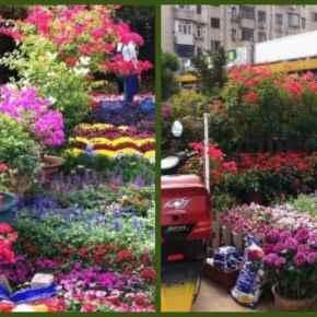 Mercado das Flores.