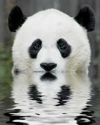 Dia de Panda – 'China na minha vida Blog' noFacebook