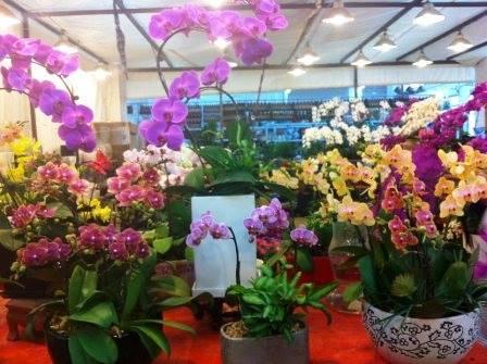 Não vejo a hora desse inverno dar uma amenizada e as flores voltarem a enfeitar as ruas de Shanghai. As orquídeas aqui são um espetáculo à parte. Essas estão numa loja do Flower Market. Foto da querida Mirela Castilho. #coisasqueamonachina #chinanaminhavida