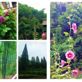 Moganshan – Floresta de Bambus naChina