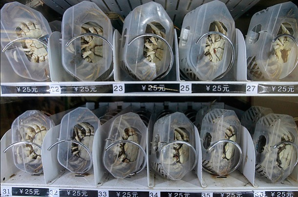 china-live-crabs-vending-maching-nanjing