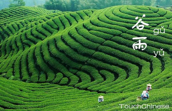 Plantação de chá.