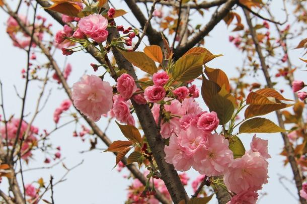 E a tão sonhada primavera, depois do duro inverno!