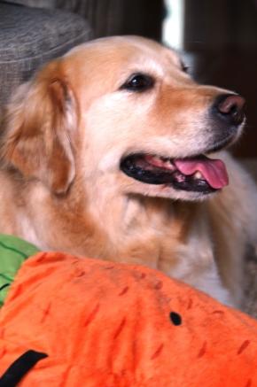 Uma cachorra (chinesa) na minhavida