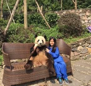 Sobre a Reserva dos Pandas emChengdu