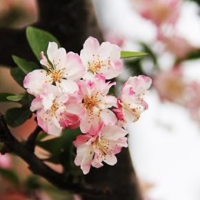 Flores na Culturachinesa