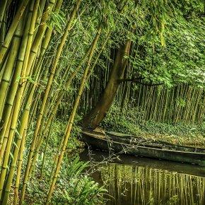 Outra lição do bambuchinês